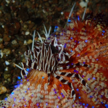 Red Whale Dive Center -
